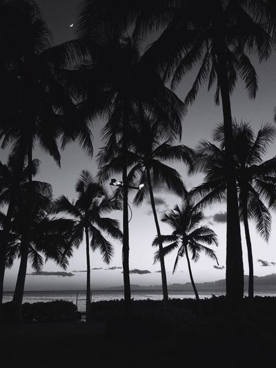 Palms Palms Sunset Blackandwhite