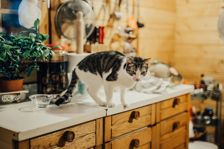 Cat looking away while standing on table