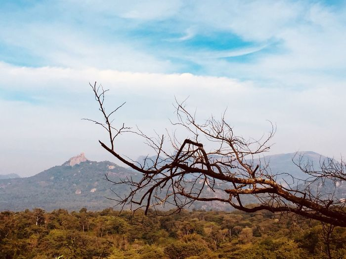 Mountain Nature Beauty In Nature Tranquility Landscape Sky Tranquil Scene Scenics Outdoors No People Day Cloud - Sky Mountain Range Plant Bare Tree Tree Tropical Tropical Climate Tropical Paradise
