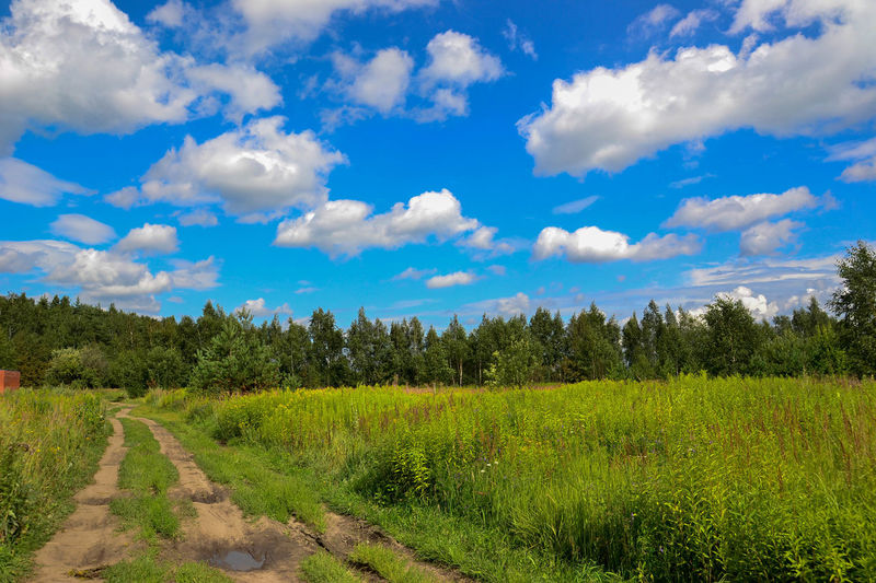 Beauty In Nature Blue Cloud Cloud - Sky Field Grass Green Color Landscape Nature Road Russian Nature Sky Summer Tranquil Scene Tranquility Tree Дорога лето небо облака природароссии