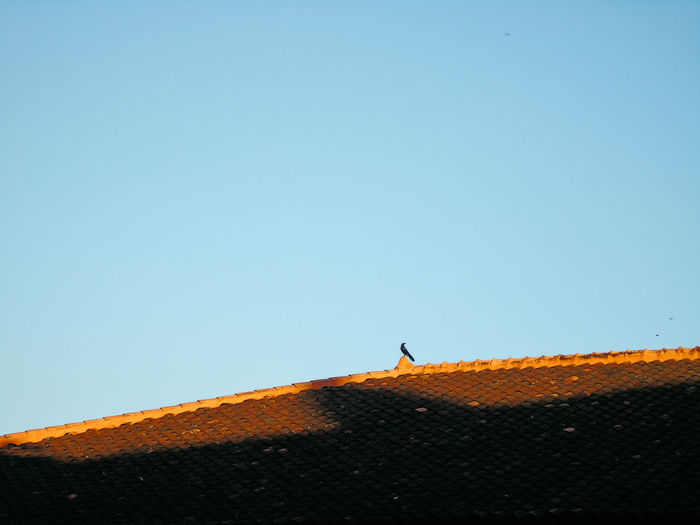 Low Angle View Of Bird Perching On Roof Against Clear Sky