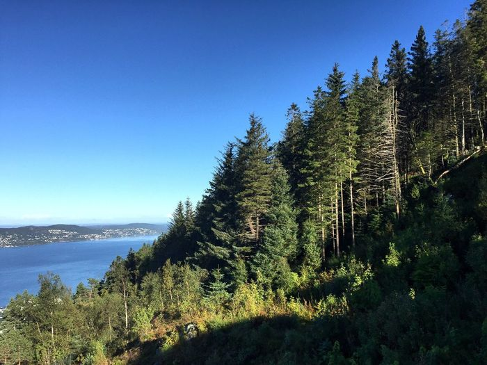 Scenic View Of Forest Against Clear Blue Sky
