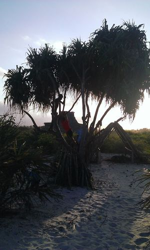 Landscapes With WhiteWall Sunset Taking Photos Enjoying Life Playing Trees Indian Ocean Dar Es Salaam Tanzania Climbing Trees Kids By The Sea Taking Photos Beach 2014 Tree By The Sea Fine Art Photography On The Way