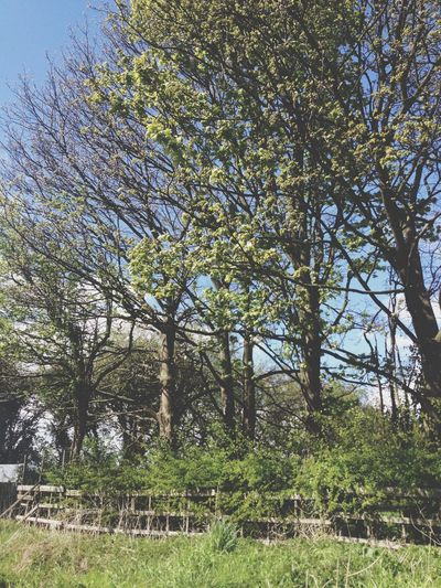 The trees looked so pretty