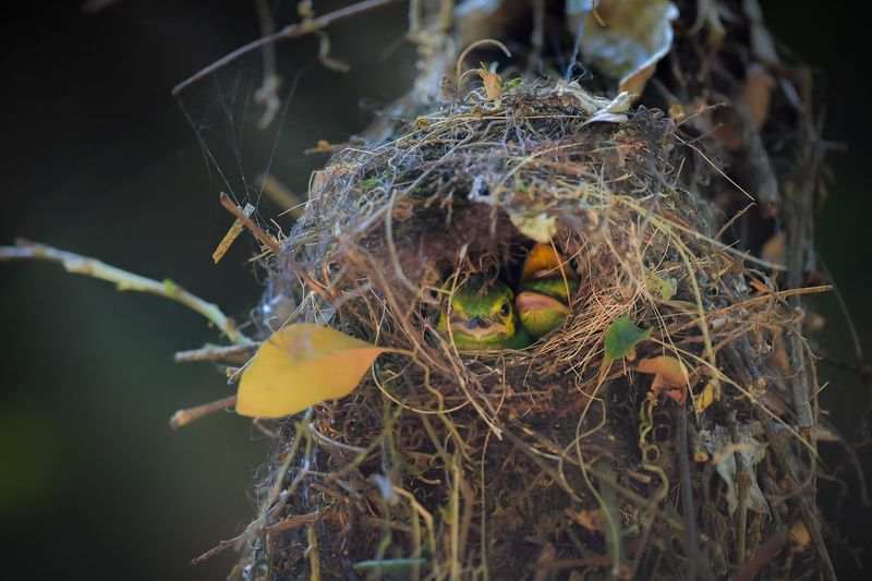 Close-up of bird nest