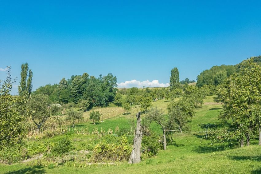 Beauty In Nature Blue Blue Sky Clear Sky Day Field Forest Grass Green Green Color Growth Landscape Nature No People Outdoors Scenics Sky Tranquil Scene Tranquility Tree Vegetation