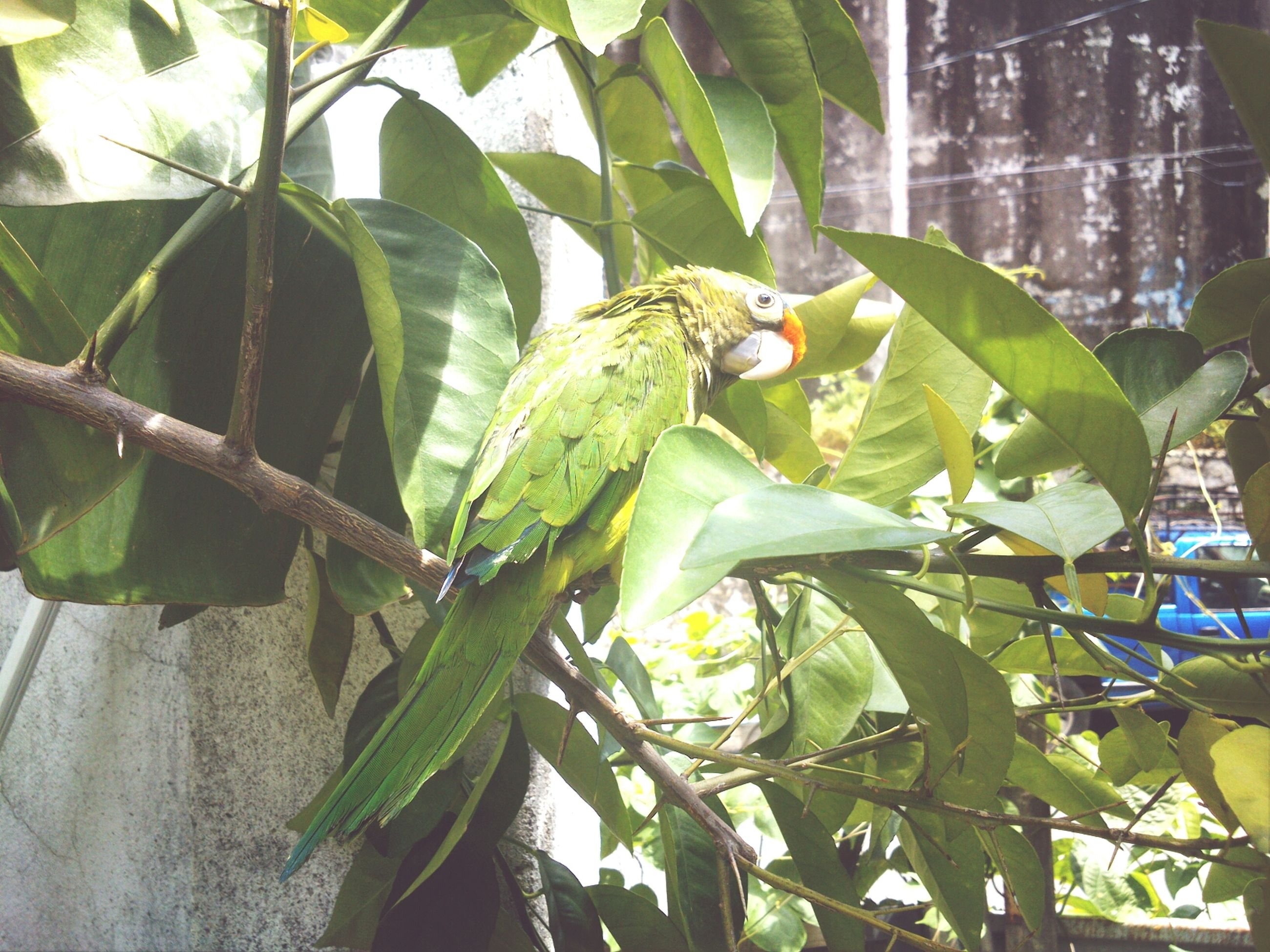 leaf, green color, growth, branch, tree, plant, animal themes, animals in the wild, nature, close-up, fruit, one animal, wildlife, focus on foreground, day, food and drink, green, outdoors, no people, sunlight