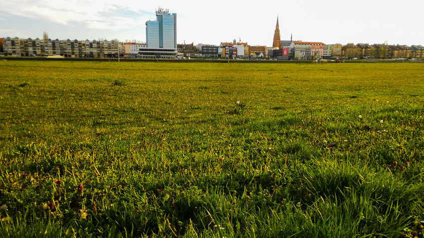 Architecture Beauty In Nature Built Structure City Day EyeEm Best Shots Field Flower Grass Grassy Green Color Growth Landscape Nature Nikon No People Osijek Osijek, Croatia Sky