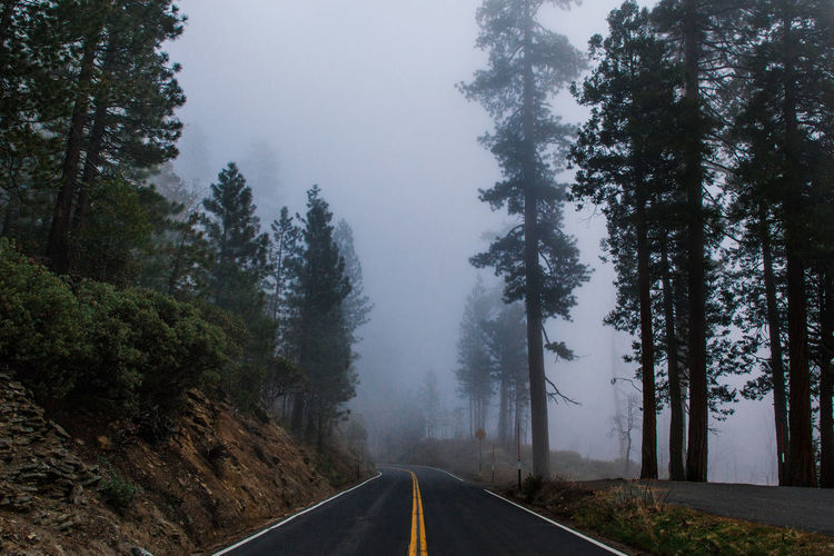 Foward Composition Day Fog Foggy Forest Forest Fire Leading Motion Narrow Nature Non-urban Scene Outdoors Perspective Power In Nature Remote Sierra Nevada Smoke Smoke The Way Forward Tranquil Scene Tree Vanishing Point Yosemite Yosemite National Park The Great Outdoors - 2016 EyeEm Awards