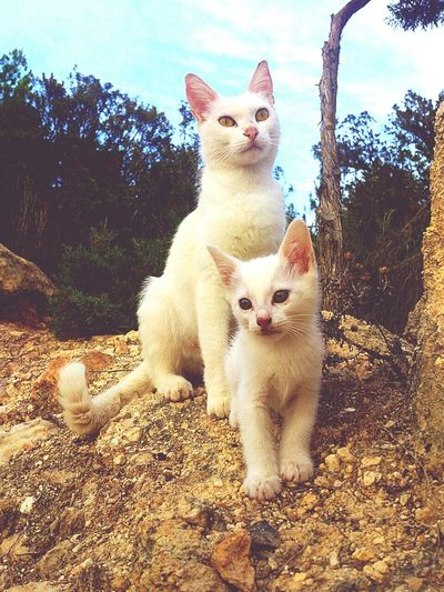 Portinax Ibiza España. Gatos Gatos Salvajes Wild Cats Pets Corner Proudmom Ternura Cat And Kitten Wildlife