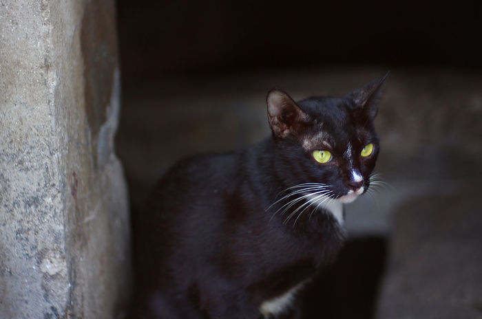 Black cat with blur background KITTE Stray Cat Alone Time Animal Themes Black Color Cat Close-up Day Domestic Animals Domestic Cat Feline Kitten Mammal No People One Animal Outdoors Pets Portrait Sitting Whisker