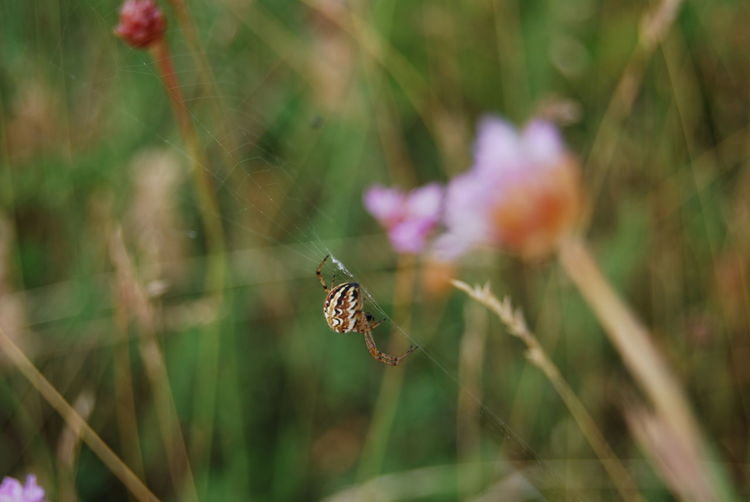 Love Yourself Perspectives On Nature EyeEm Ready   Summer Exploratorium 10 My Best Photo