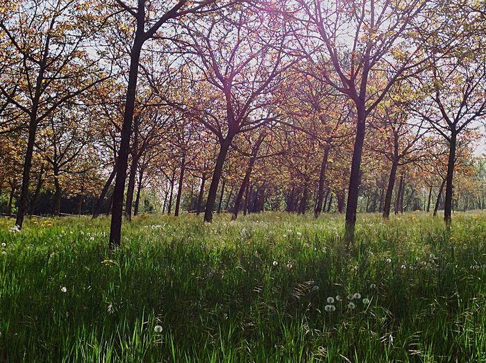 Spring Into Spring Spring walnut trees