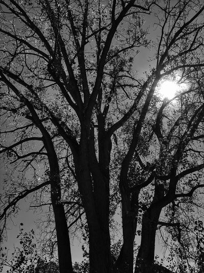 Tree Branch Tree Trunk Nature Growth Low Angle View Sunlight No People Outdoors Day Beauty In Nature Scenics Sky Blackandwhite