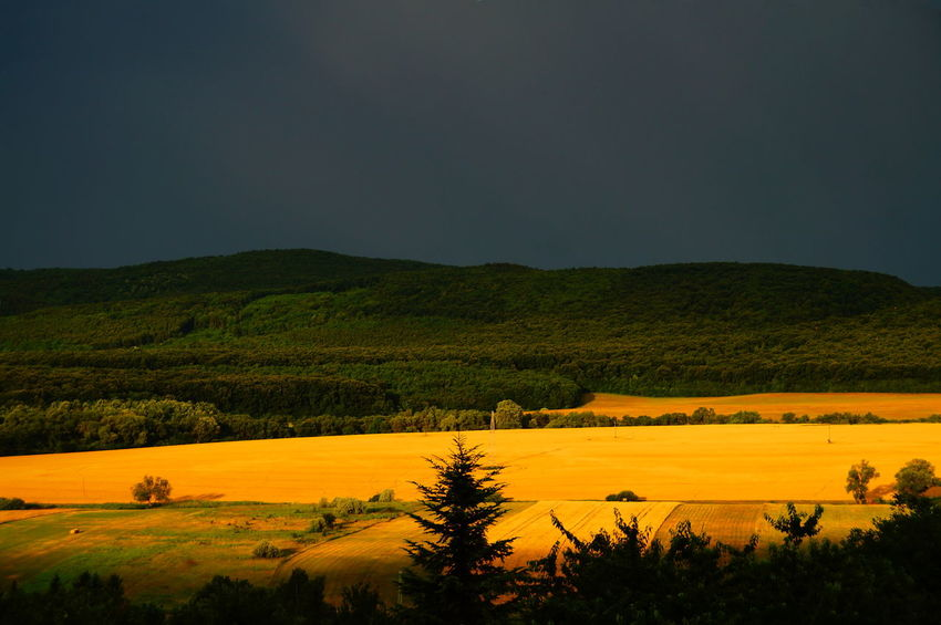 Sunny morning fields in rainy, stormy weather Dark Sky Morning Rain Beauty In Nature darkness and light Day Field Growth Landscape Mountain Nature No People Outdoors Pilis Pilisszántó Plant Scenics Sky Storm Cloud Tranquil Scene Tranquility Tree Yellow