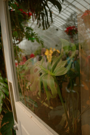 Close-up of flowering plants seen through glass window