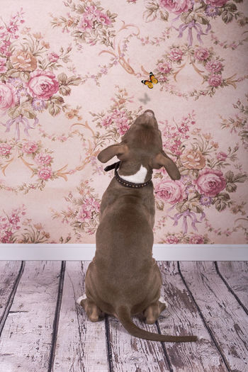 Raven - still learning to float like a butterfly Animal Animal Themes Butterfly Curiosity Dog Domestic Animals Floral Wallpaper Home Interior Indoors  One Animal Pets Sitting Zoology Interior Views