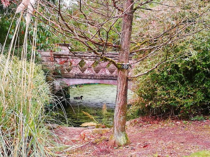 Duck Duck Pond Quaint Bridge Public Park Park Tree Outdoors No People Nature Growth Day Water Beauty In Nature Branch Architecture Sky