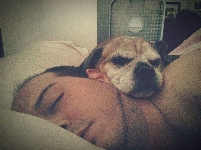 First Eyeem Photo My Guys ♡ Puppy Love Sunday Morning Snuggles Lazy Sunday Truelove
