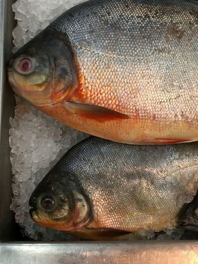 Seafood Fish Food And Drink Food No People Raw Food Fish Market Healthy Eating Freshness Indoors  Close-up Cold Temperature Day Animal Themes Pomphretfry Pomphret Seafoods Fish On Ice Fishes Marine Food PomfretFish Pomfret Market Cold Storage Food And Drink