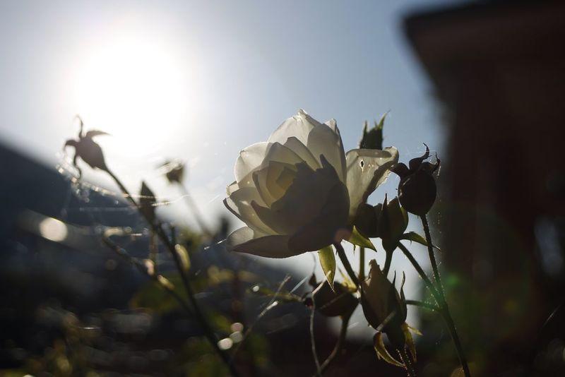 Flowers Autumn Sun