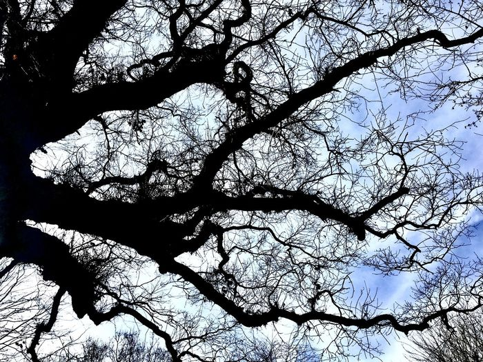 Low angle view of silhouette bare tree against sky