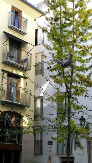 Building Exterior Residential Building Architecture Built Structure Window Balcony Tree Outdoors Day Apartment City No People Sky