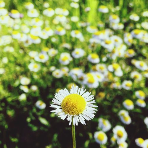 Flower Nature Growth Petal Beauty In Nature Plant Blooming Freshness Yellow Flower Head Fragility No People Outdoors Close-up Day Gun Range