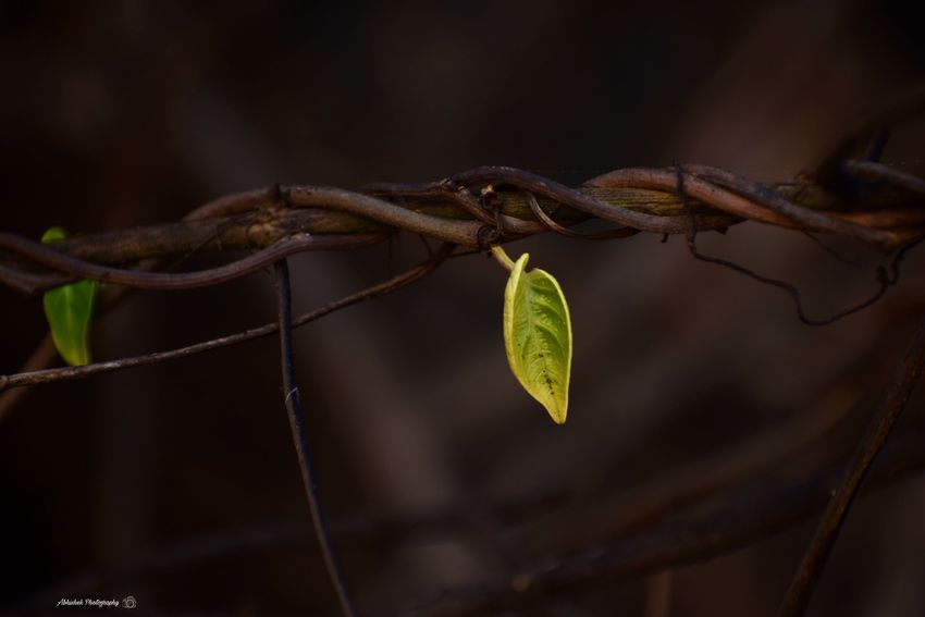 """"""" I may not have gone where I intended to go, but I think I have ended up where I needed to be """" Clicked On Nikon D3300 Leaves🌿 Branches And Leaves Green Color Close-up Brown Color Beauty Nature Growing"""