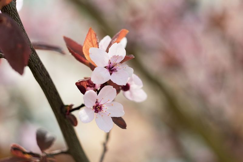 Pink spring Popular Photos Gdynia Growth Pink Color Flower Head Nature No People Blossom Day Outdoors Tree