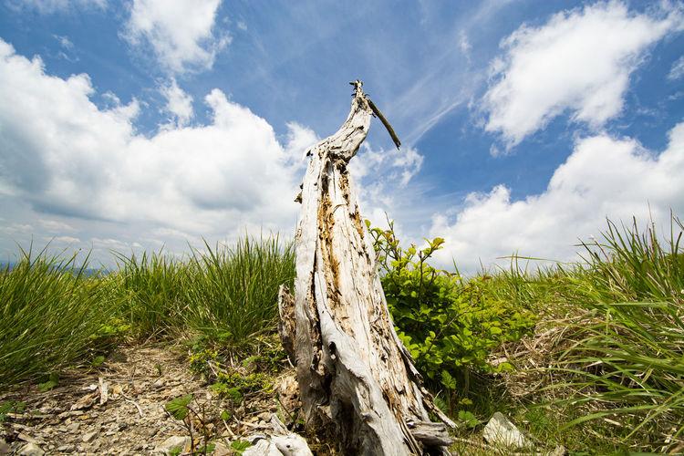 Fallen shrub's