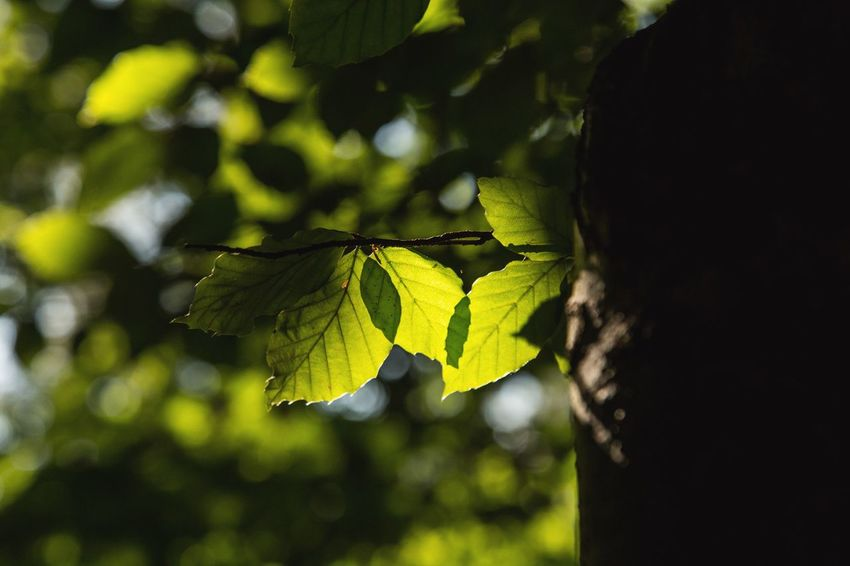 I'll see it through EyeEm Gallery Light And Shadow EyeEm Best Shots EyeEm Gallery EyeEm EyeEm Nature Lover Leaf Nature Growth Green Color Outdoors Beauty In Nature Focus On Foreground Close-up Day Plant Tree Fragility No People
