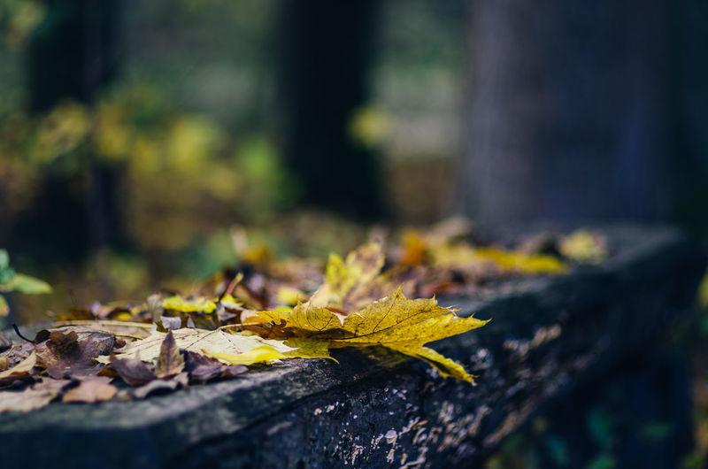 Fallen Autumn Leaves On Retaining Wall