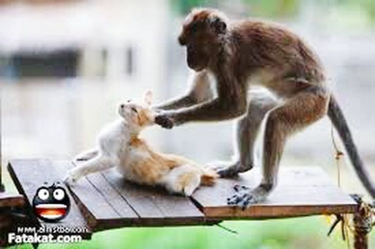 Monkey worry act.. The Amazing Human Body Balti Hicham.