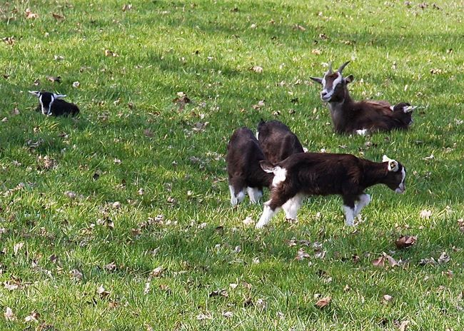 Animal Family Animal Photography Animal Themes Animal Collection Beauty In Nature Berliner Ansichten Black Color Brown Domestic Animals Enjoying Nature Family Field Grass Grazing Green Color Growth Landscape Nature Playing Spring Spring Into Spring Taking Photos Walking Around Wineandmore Young Animal