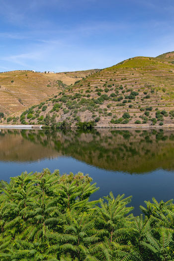 River Douro reflection 1 Arid Climate Beauty In Nature Blue Day Environment Green Color Growth Land Landscape Mountain Nature No People Non-urban Scene Plant Scenics - Nature Sky Tranquil Scene Tranquility Tree Water