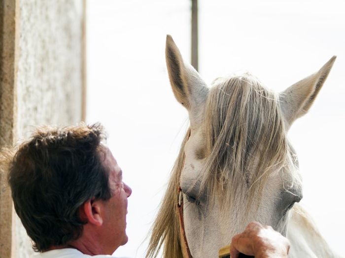 Man combing mane of horse
