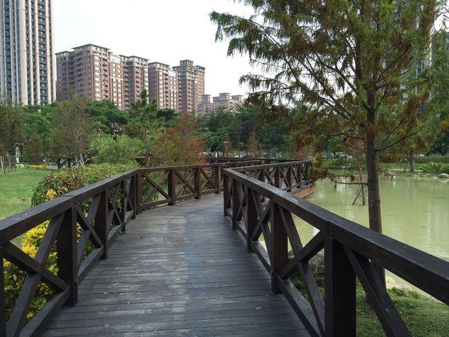 橋 農十六 散步