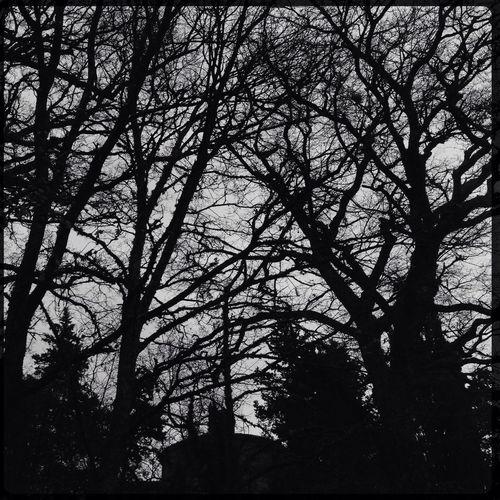 Incumbent NEM Black&white Trees