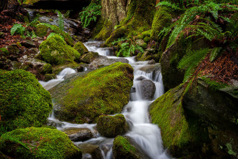Rainforest Creek, British Columbia. A small stream meanders through a rainforest at Harrison Hot Springs, Canada. Creek Flowing Harrison Hot Springs Mossy Nature Rain Beauty In Nature Blurred Motion British Columbia Canada Environment Forest Forest Photography Long Exposure Moss Motion Nature No People Outdoors Outdoors Photograpghy  Rainforest Scenics Stream Water Waterfall