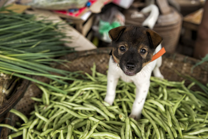 Cuteness ASIA Dogs Dogs Of EyeEm EyeEm Gallery Green Beans Puppy Love Travel Vietnam Animal Themes Bamboo Basket Bamboo Tray Curious Cute Documentary Dog Domestic Animals Market Stall Mutt No People One Animal Pets Playful Puppy Spring Onion EyeEm Ready   Food Stories An Eye For Travel