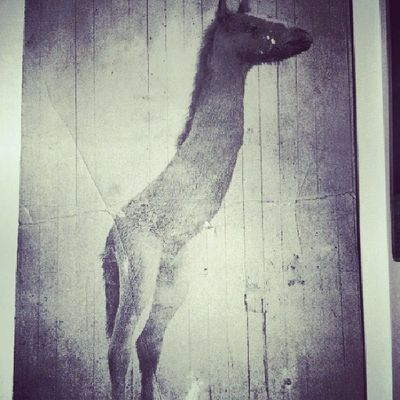 The pictures in this book scare me Missperegrineshomeforpeculiarchildren Horse Odd Strange scary blackandwhite