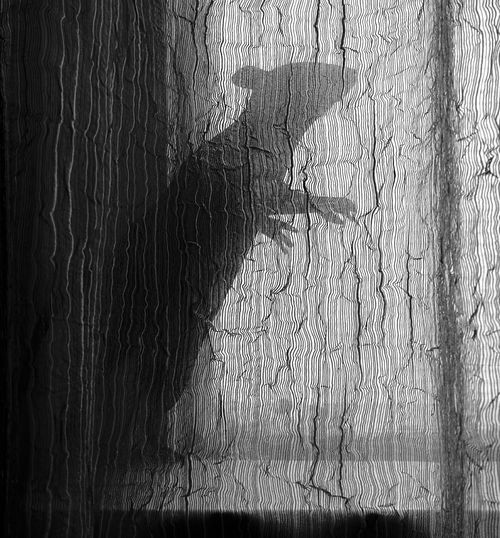 Rats in the Walls Rat Curtain Window Hiding Creative Light And Shadow