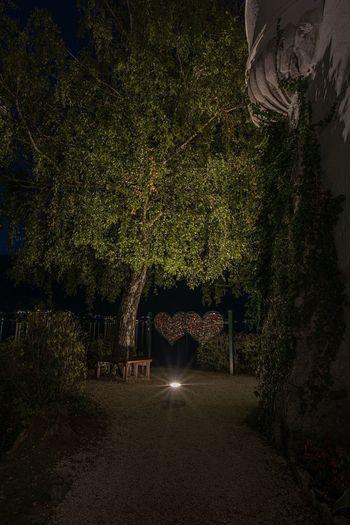 Illuminated trees in garden at night