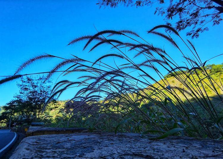 Plants growing on field against blue sky