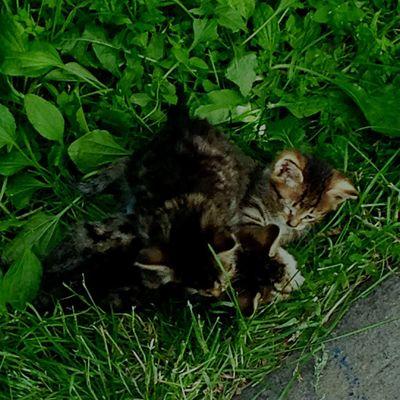 котятки вдобрыеруки