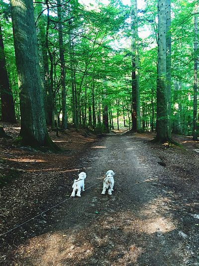 Forest Animal Themes Dog Domestic Animals One Animal Nature Beauty In Nature WoodLand Growth Pets