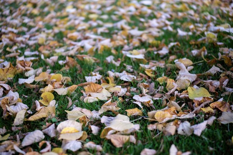 Full frame shot of flowering plants and leaves on field