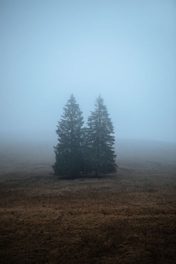 Pine trees on field against sky during autumn. moody,foggy nature landscape