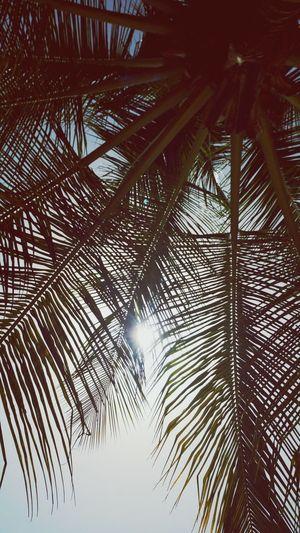 Holiday La Romana Dominican Republic Relaxing TreePorn